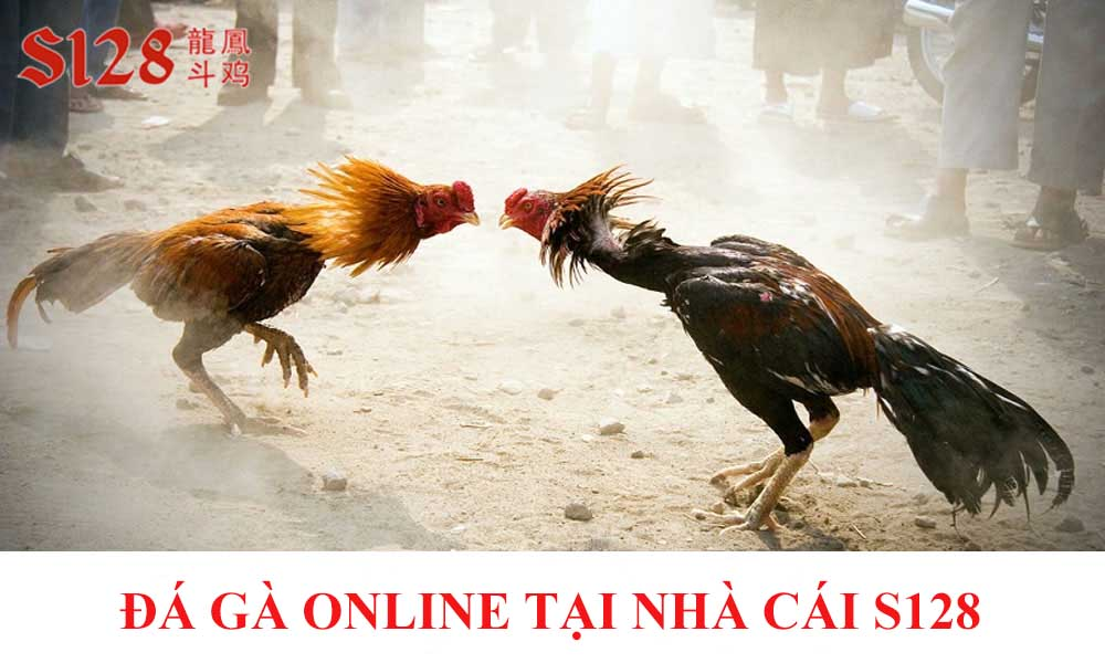 Cá cược đá gà online tại S128