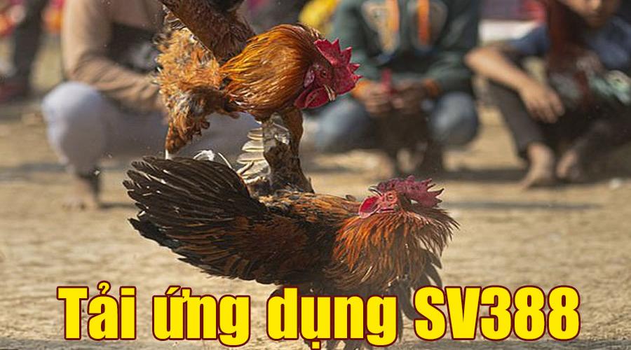 Ứng dụng SV388 - Tải App SV388 xem đá gà trên điện thoại